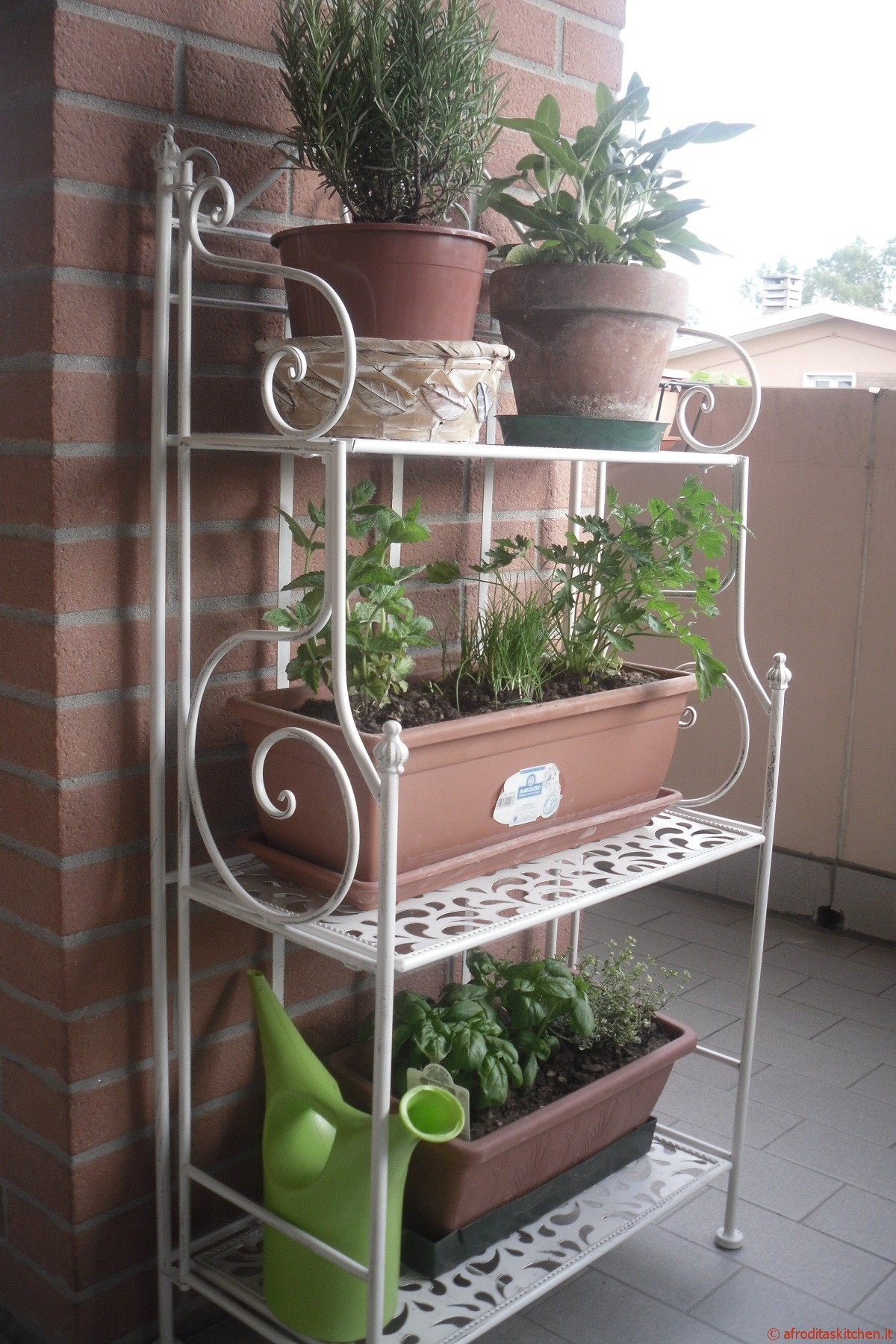 Le piante aromatiche come coltivarle sul balcone - Cucina sul terrazzo ...