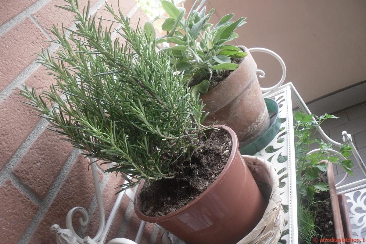 Piante Aromatiche Terrazzo : Le piante aromatiche come coltivarle sul balcone
